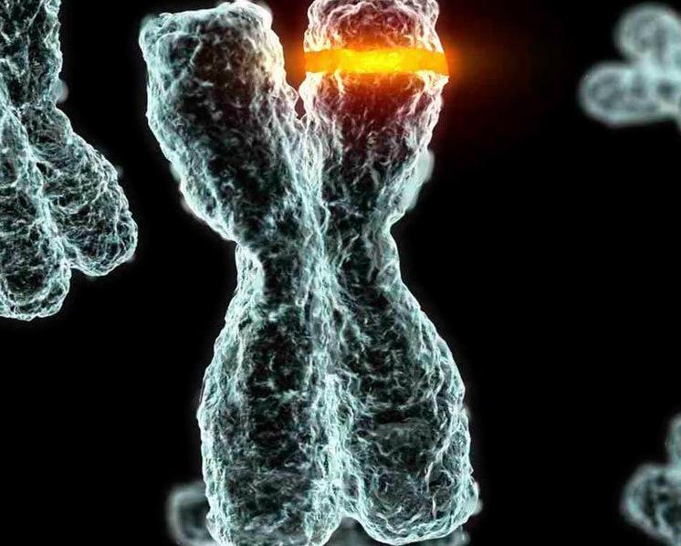 sera mesmo que dominamos o genoma